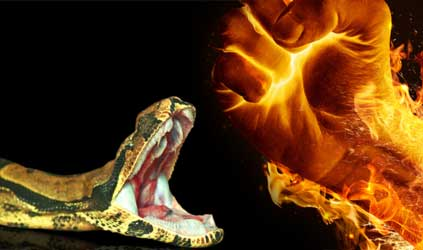 Hand consumed in flames (Photo by kevron2002). Royal boa opens mouth (Photo by Matic.Sandra). Photoshop composite by Steve Sabz